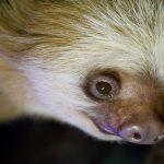 Kindy Zoo: Animals Up Close