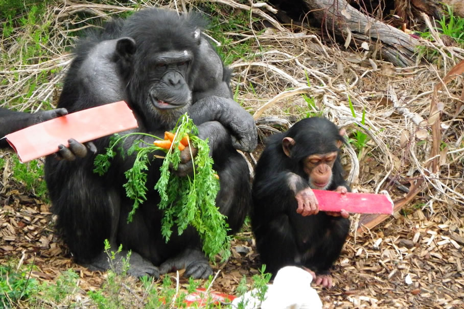 Monarto Zoo – Animal Habitats Student Inquiry