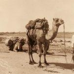 Australia's Muslim Cameleers Website